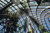 Boettcher Memorial Tropical Conservatory in the Denver Botanic Gardens