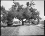 Pasadena, Cal., Orange Grove Ave.