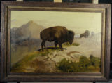 Buffalo at water hole