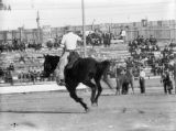 Rodeo bronco riding