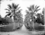 Palm walk, Long Beach