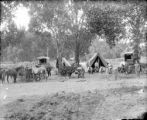 Wagons, tents, & livestock
