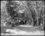 Shady lane, Elitch's Garden