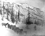 Mule train packing ore from Sunnyside Mine