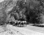 Scene along Million Dollar Highway. Pack mules loaded with mine supplies.