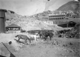 Cripple Creek labor strike