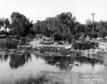 The Lily pond and rock garden, Washington Park, Denver