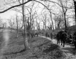Men and mules on wooded trail, Italy