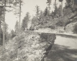 Government road near Sierra Camp, on road to Giant Forest