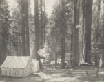 Sierra Camp - Giant Forest