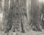 Dardanelle group, Giant Forest