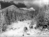 "Mt. Neva ""Forest Glade"" 1950"