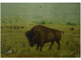 On the buffalo range [art original].