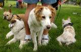 (DENVER, CO., June 27, 2004)  (Lt. to RT.) Bullion, 5, of Englewood, Maggie, Molly, both...