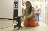 Veterinary technician Lidia Campuzano, 22, CQ, helps Lola the cat learn to walk on her two front...