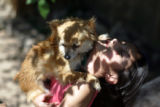 "Celine Venzer, cq, 7, plays with her chihuahua ""Shakiro"" in her backyard on Tuesday,..."