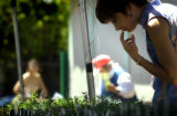 (DENVER, Colo., May 7, 2004)  Lorraine Thorson of Colorado Springs puruses some of the plants for...