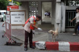 A traffic official tries to pet a stray dog outside the Bangkok Christian College in Thailand at...