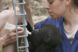Mandy Hollingsworth, left, feeding, hand only showing, primate keeper, feeds Umande with Debbie...