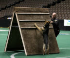 Jim Valbert (cq), Jefferson County Sheriff Dept, puts his dog Zar through the agility course...