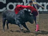 Paco Munoz successfuly makes a pass with a Bull brought in from Spain  during a presentation of...