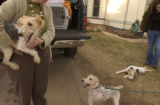 Kathleen Orozco, (cq), left, holds a rescued dog as two play on the ground and Courtney...