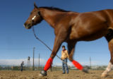 "Dona Ramsteck(CQ) of Loveland lunges her horse ""Watson"" on the Stock Show grounds in..."