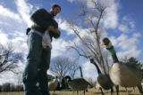 Justin Nail (cq), of Albuquerque, NM, feeds bread to a gaggle of geese in City Park in Denver ,...