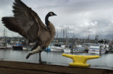 Seattle, Washington-The Fishermen's Terminal in Seattle has been a flashpoint for economic and...