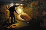 Hector Gonzalez (cq) vacuums the floor of the Ant Colony display of Children's Museum Thursday...