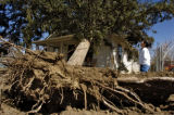 Jacqueline Mares (cq) looks at a large tree that fell on her house Sunday afternoon March 26, 2006...