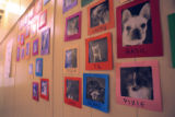 A entry way at Dog-Topia in Denver displays doggie portraits along a wall for client to see there...