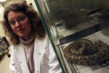 Colorado University at Boulder biologist Dr. Leslie Leinwand (CQ), sits next one of her Python...