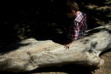 DLM00562    Liam Griffy, 4, of Fowler, Colo. sits on a log etched with messages written to...