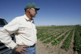 DLM01105   Farmer David Petrocco stands in a field of spinach near Gilcrest, Colo. Tuesday, Sept....