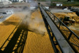 Steam rises from a pit of corn mash that is used as feed for catle at  Sterling Ethanol LLC...