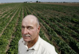 DLM01080   Farmer David Petrocco stands in a field of spinach near Gilcrest, Colo. Tuesday, Sept....