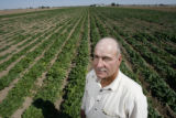 DLM01081   Farmer David Petrocco stands in a field of spinach near Gilcrest, Colo. Tuesday, Sept....