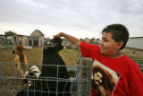 Jerry Valle (cq), 14 years old, pets a buck goat Thursday afternoon September 21, 2006 at The...