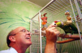 (CENTENNIAL, CO., MAY 11, 2004) Joe Payne, feeds his Lilac Crown Amazon Pepito, an almond at his...