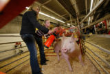 Sarah and Emma Vickland, from Longmont, Colorado, and first-place hog, Cinderella. Emma, 13,...