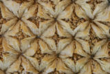 Bird's Nest pastry, made with filo pastry and cashew filling, at the Middle East Market,  at 2254...