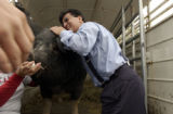 (DENVER, Colo., May 12, 2004) Rodney Fernandez, happily reacts after kissing the pig. He won,...