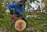 DLM00051   Jason Shimkos uses a chain-saw to cut through a branch after a large part of the maple...
