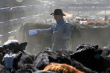 State Brand Inspector Eldon Crowder (cq) checks brands at the High Plains Auction Exchange in...