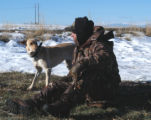 Libby and Mike Augustine debate whether a distant goose flock might actually be inbound.  (ED...