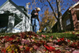 Susan Scott Floyd (cq) rakes leaves in her yard Wednesday afternoon October 25, 2006 on South York...