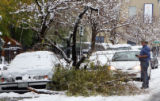 Ted Tompkins (cq) of the Denver Forestry Department checks on a downed tree on Curtis Street and...