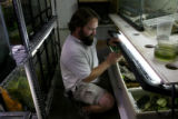 Denver Zoo, amphibian keeper, Thomas Weaver, cq, lifts the lid to a breeding tank for Panamanian...
