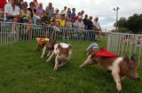 (PUEBLO, Colo., August 24, 2004)Hendrick's Racing Pigs Show had a four porker neck and necker on...
